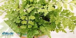 Pflanzen Wenig Licht : pflanzen wenig licht pflanzen schlafzimmer wenig licht ~ Lizthompson.info Haus und Dekorationen