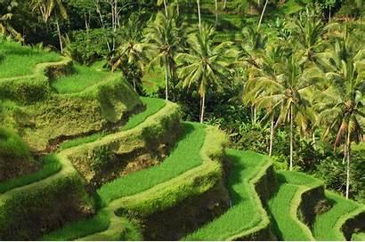Bali Indonesia Ubud Sumatra Hostels Guesthouses Homestays