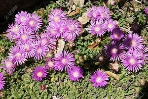 Plantes à Suspendre : plante grasse exterieur vivace plante grasse exterieur ~ Premium-room.com Idées de Décoration