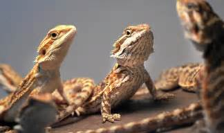are exotic pets your thing then you ll need to know this