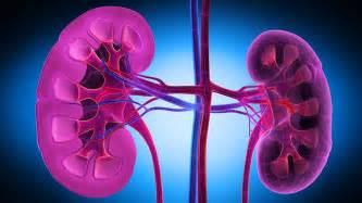 nierenschwäche symptome nierenschwäche erkennen und behandeln ndr de ratgeber gesundheit