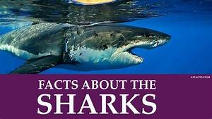 10 Crazy Random Facts About Sharks A1facts