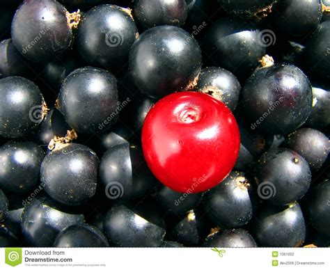 black currant  cherry  composition contrast stock