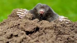Hausmittel Gegen Ameisen Im Garten : hausmittel gegen schnecken gegen schnecken diese ~ Whattoseeinmadrid.com Haus und Dekorationen