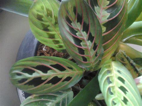 26 new house plant identifier