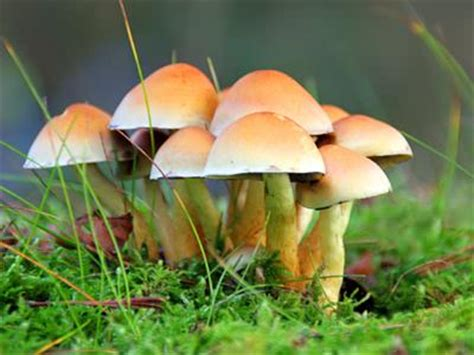 Forestry  Learning Fungi Definition  Fungi Are
