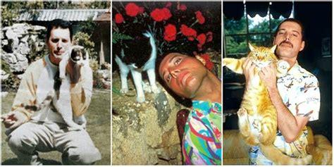 extraordinary friendship freddie mercury   cats