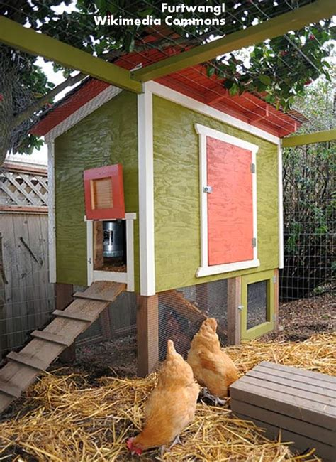 Chicken House Designs by Roots N Shoots The C Files How To Raise Chickens