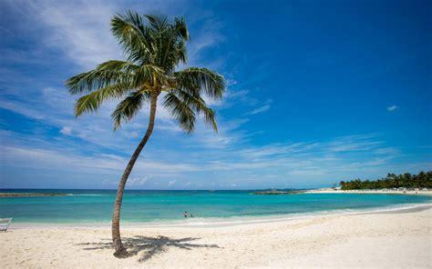 tropical palm tree beach ocean hd wallpaper nature