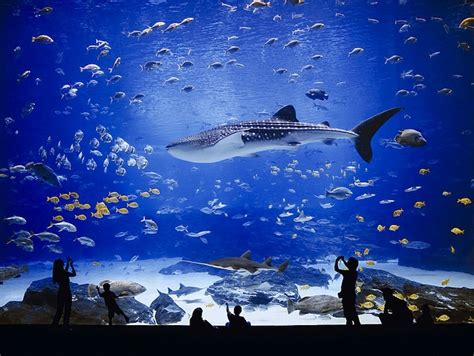 the world s largest aquarium my modern met