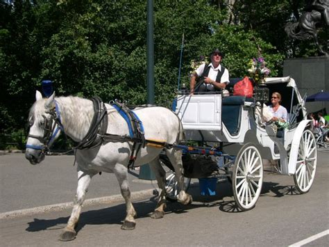 anti horse carriages youth  awesome