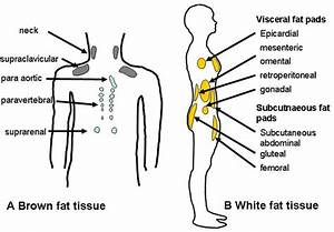 The Different Types Of Body Fat And How They Affect Your