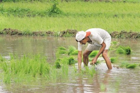How Will Farm Loan Waivers Impact The Indian Economy