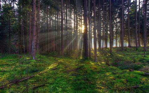 Green Forest by Green Forest Hd Wallpaper Hd Desktop Wallpapers 4k Hd