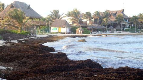 La amenaza del sargazo impactará las costas de Tulum y ...