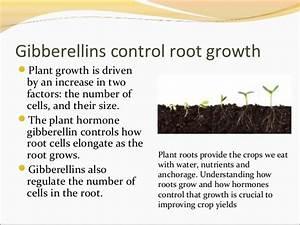 Plant hormones and plant reproduction