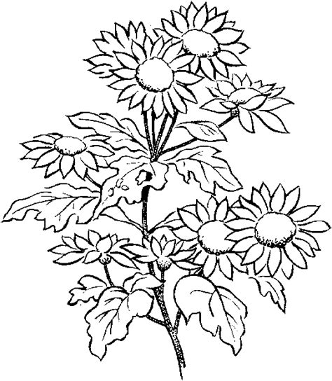 growing flowers  printable coloring pages