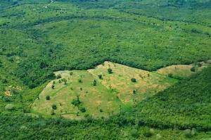 Brazil Busts Gang Accused of Amazon Rainforest ...