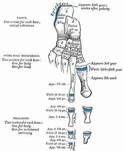 34 Best Images About Human Anatomy On Pinterest