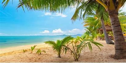Tropical Palm Trees Landscape Nature Sand Sea