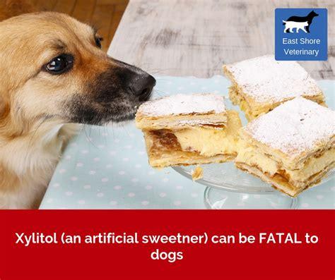 xylitol  hidden danger   dog east shores