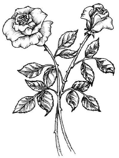 draw  rose howstuffworks