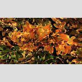 Orange Realtree Wallpaper   1280 x 720 jpeg 117kB