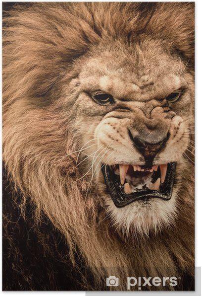 close  shot  roaring lion poster pixers