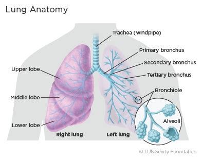 lung cancer developed cancer news update
