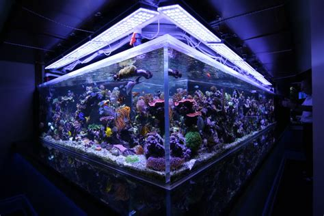 saltwater tank mixed reef 1350 gal orphek led lighting