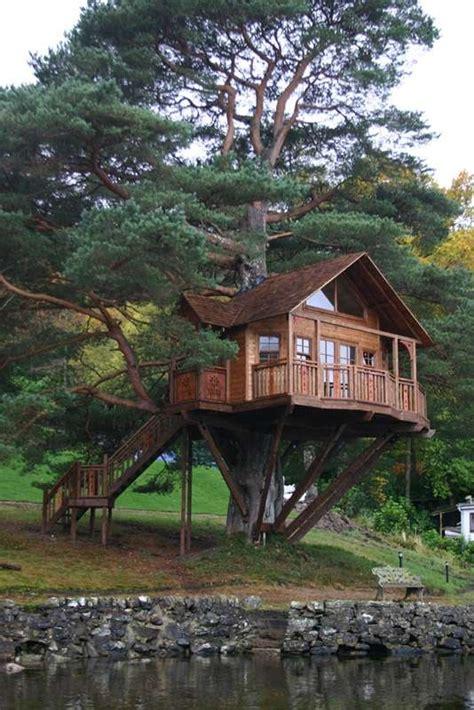 amazing dream tree houses