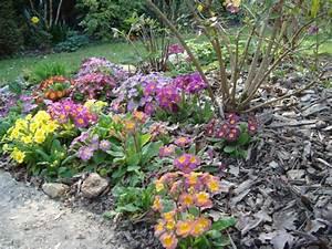 Couvre Sol Vivace : plantes vivaces couvre sol au jardin forum de jardinage ~ Premium-room.com Idées de Décoration