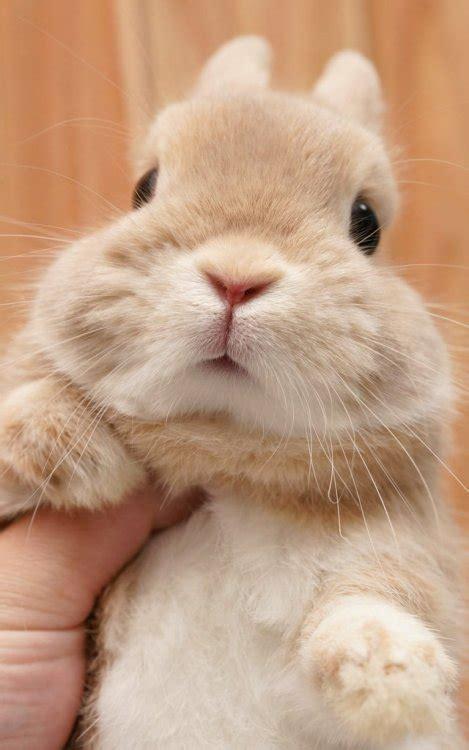cute animals  tumblr