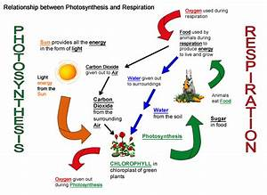 Breathing  Photosynthesis And Respiration  U2013