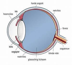 Cilinder oog
