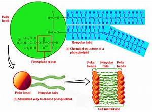 Mitochondrial Membranes And Lipid Replacement Therapy