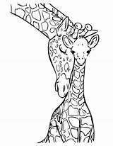 Coloring Pages Jungle Giraffe Baby sketch template