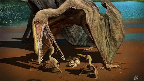 ancient flying reptiles cared   young fossil