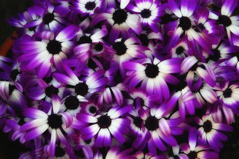 purple flowers purple flowers wallpaper purple background wallpapers