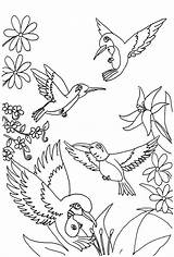 Hummingbird Coloring Pages Printable Hummingbirds Butterfly sketch template