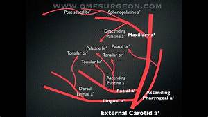 Allso Clinic   Uc62c Uc18c Uce58 Uacfc  Le Fort 1 Osteotomy