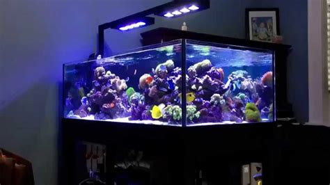 deep blue professional 80 rimless reef tank - YouTube