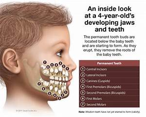 About Teeth