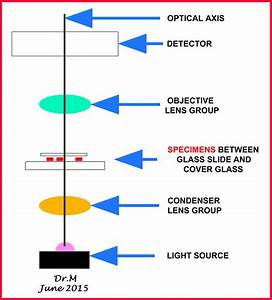 Kinds Of Light Microscopes