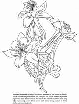 Columbine Flower Tattoo Drawings Coloring Yellow Drawing Flowers Tattoos Photobucket Tharens Nature S39 Sketches Designs Embroidery Line sketch template