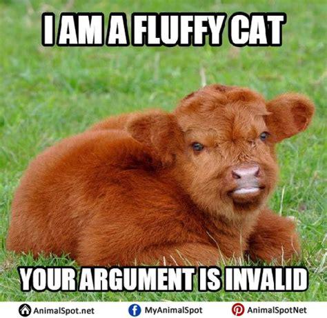 Calves Meme - cow memes
