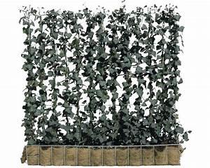 Efeu Pflanzen Kaufen : sichtschutz hecke efeu helix 120 x h 100 cm bei hornbach kaufen ~ Buech-reservation.com Haus und Dekorationen