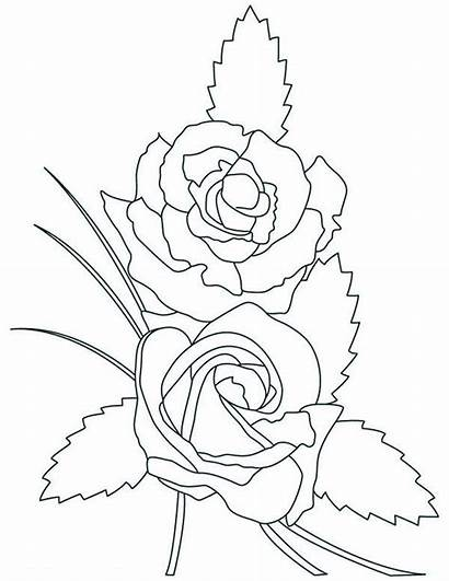 Coloring Rose Pages Roses Adults Flowers Advertisement