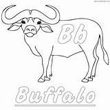 Buffalo Coloring Drawing Line Printable Face Sheets Animal African Animals Simple Coloringfolder Getcolorings sketch template