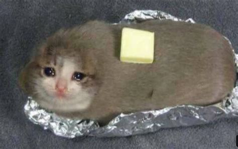 Out New And Improved Cat Butter Yub